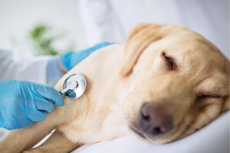 Công bố chất lượng kem bôi giúp dịu ngứa, viêm và dị ứng cho thú cưng tại Hồ Chí Minh