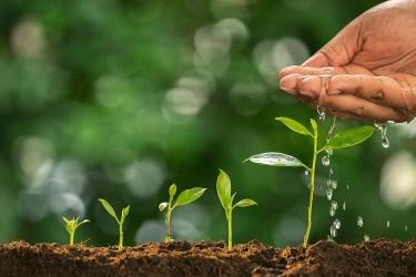 Hợp quy phân bón hữu cơ