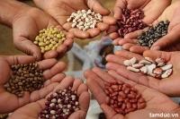 Hướng dẫn tự công bố chất lượng sản phẩm Ngũ cốc sản xuất trong nước